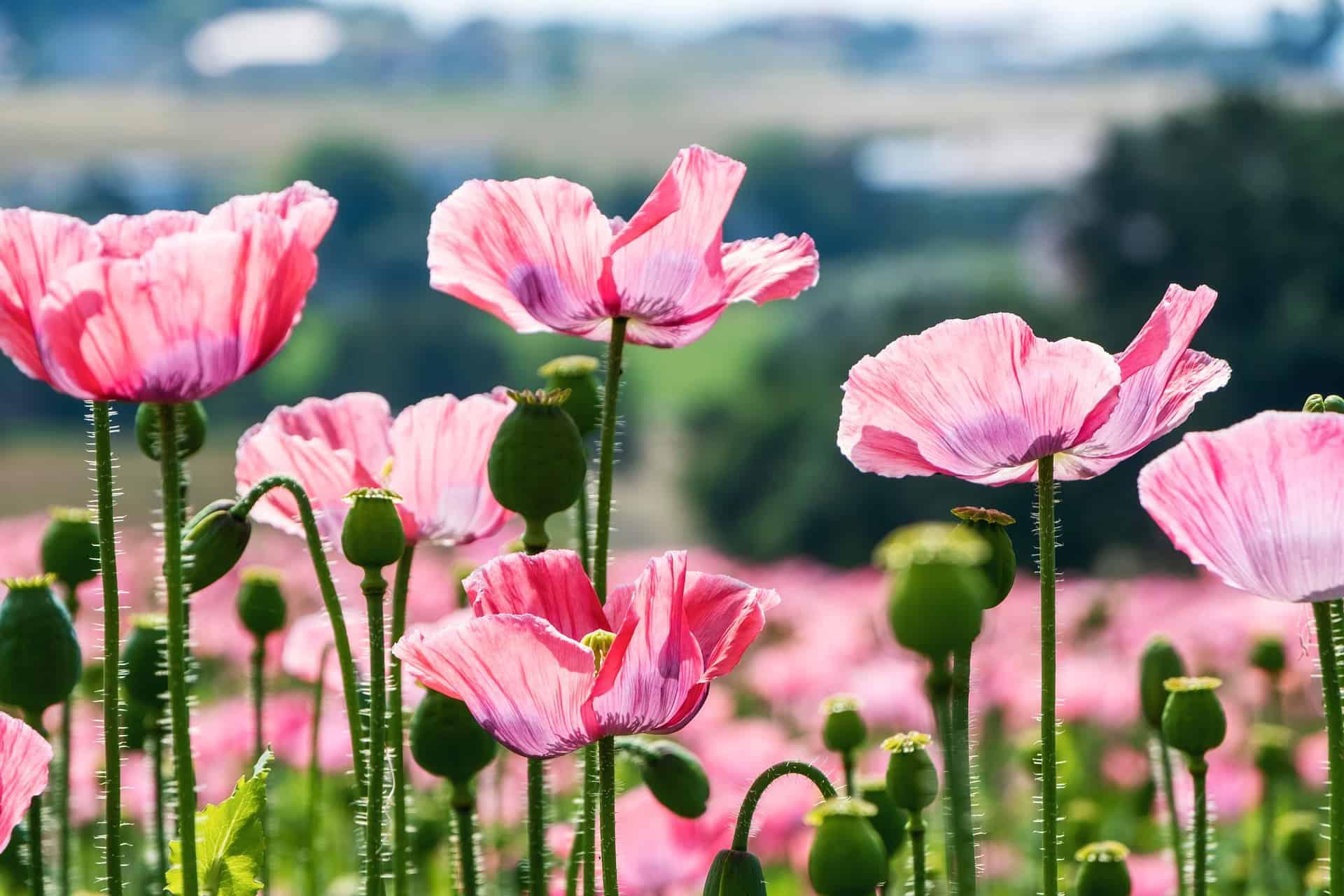 August Birth Flower Gift Ideas