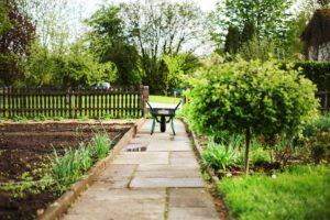 August Garden Tips