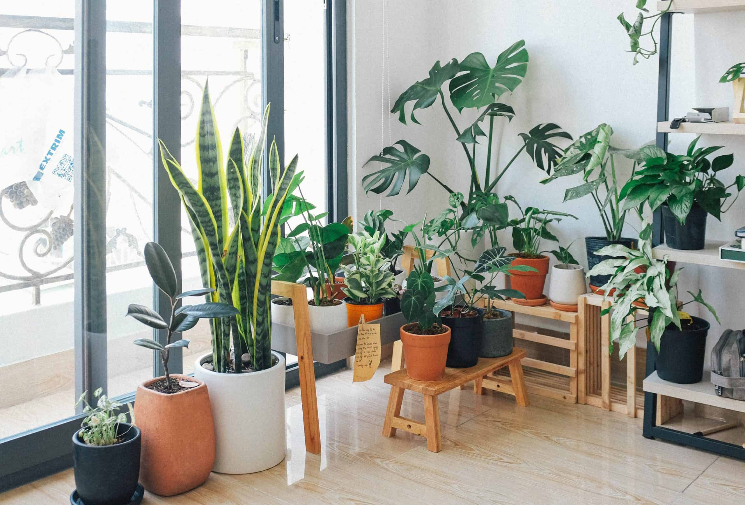 Best Automatic Watering System for Indoor Plants