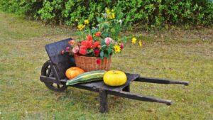 Best Companion Flowers for a Vegetable Garden