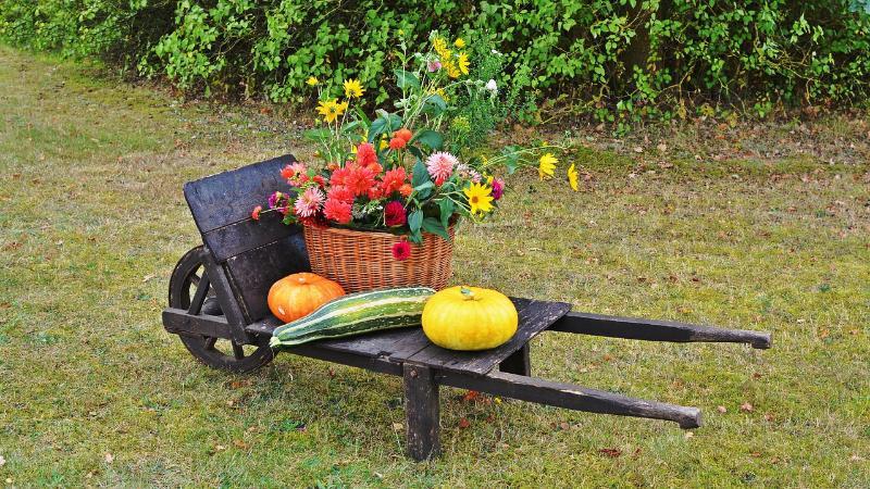 Best Companion Flowers for Vegetable Garden