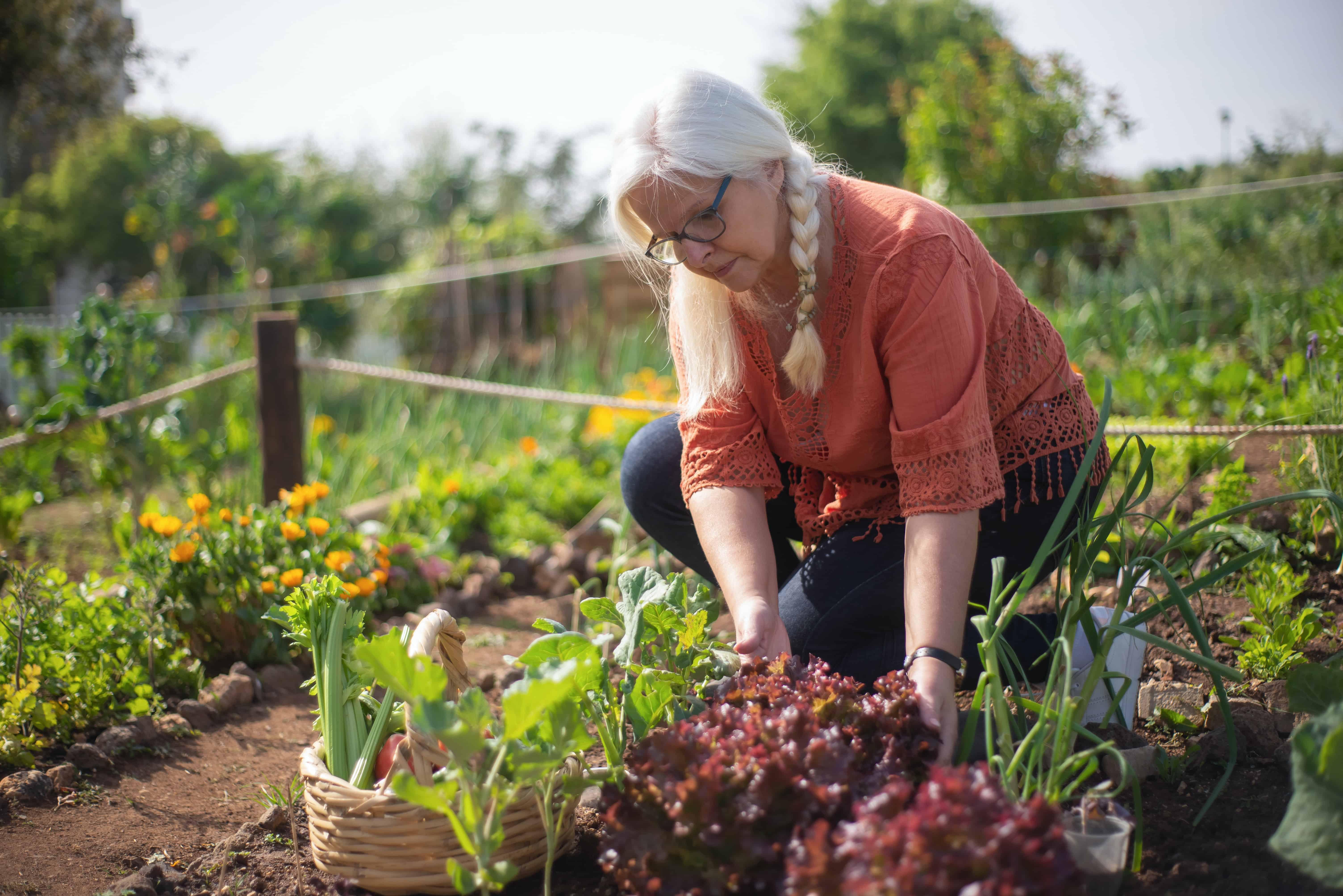 Best Drip Irrigation System for a Vegetable Garden