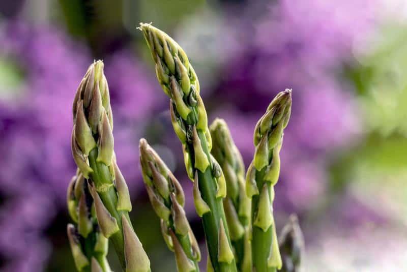 Best Fertilizer for Asparagus