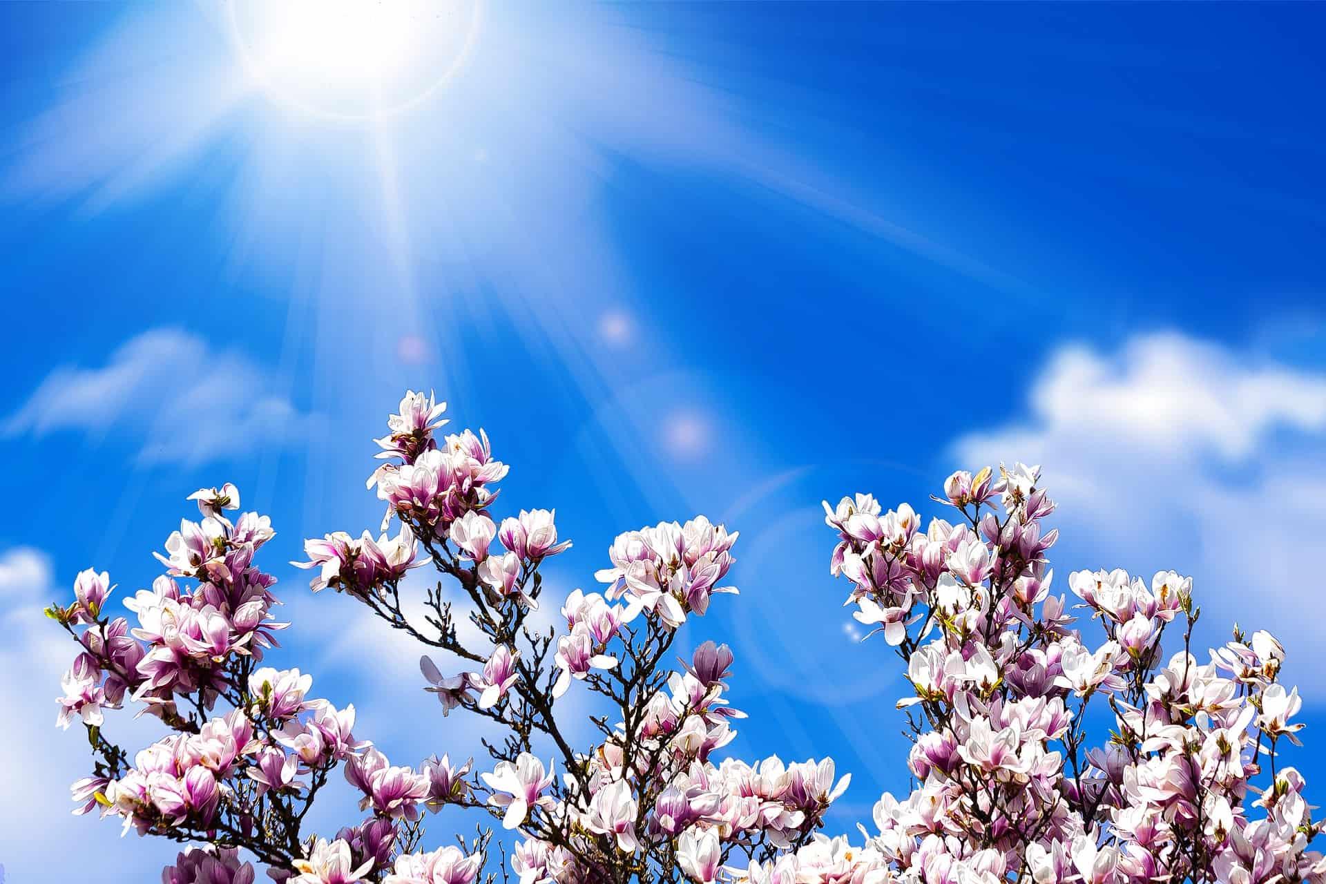 Best Fertilizer for Magnolia Trees