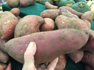 Best Fertilizer for Sweet Potatoes