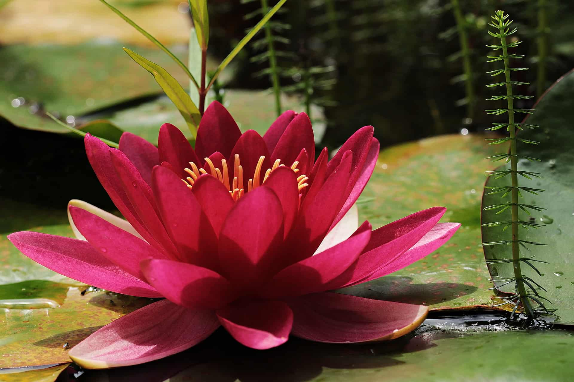 Best Flowers for Aquaponics