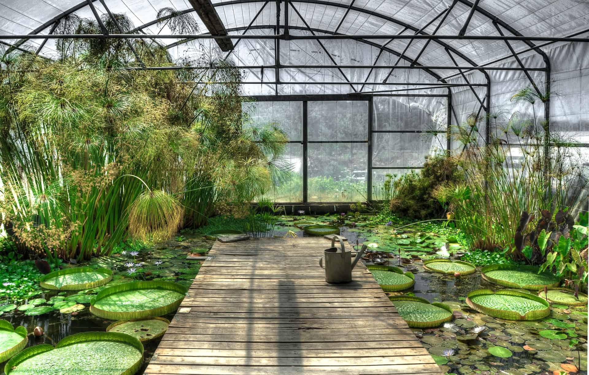 Best Greenhouse for Aquaponics