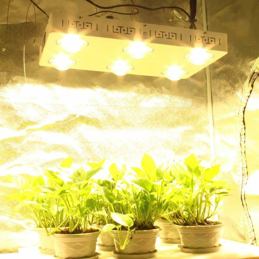 Best LED Grow Light for a 4×4 Tent