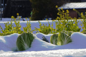Best Plant Covers for Winter