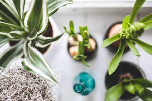 Best Soil Moisture Meter for Indoor Plants