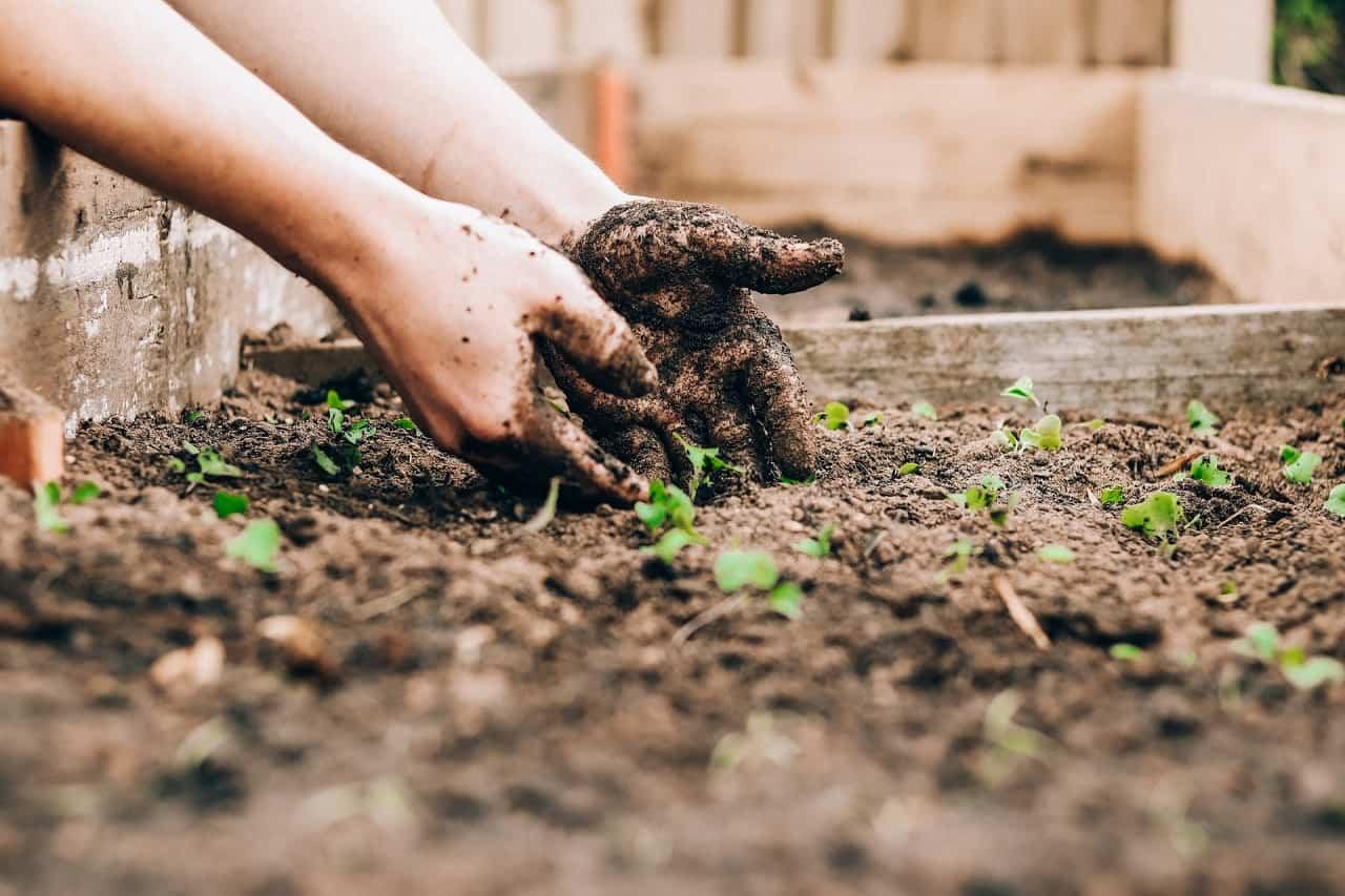 Best Soil Test Kit for a Vegetable Garden