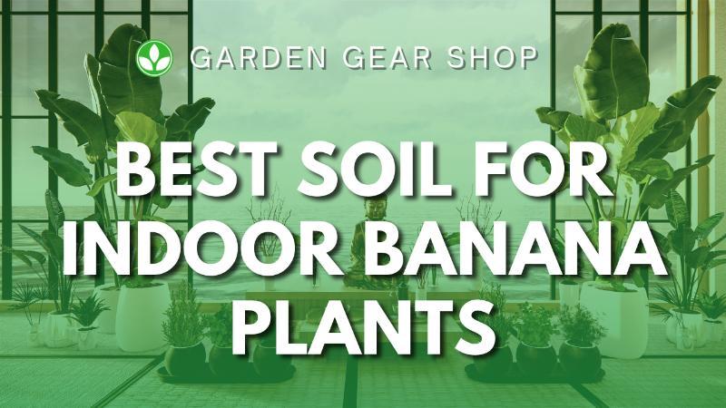 Best Soil for Indoor Banana Plant