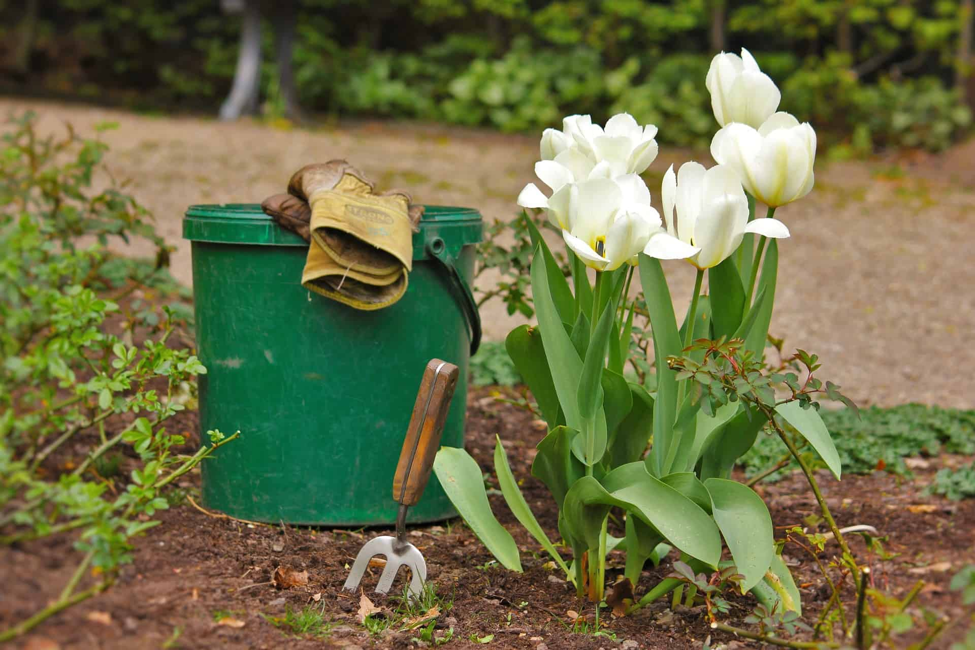 Can You Plant Flowers After Using Preen