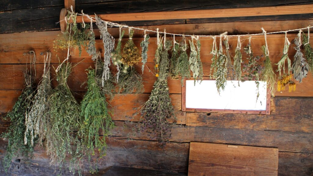 What Herbs Can You Dry