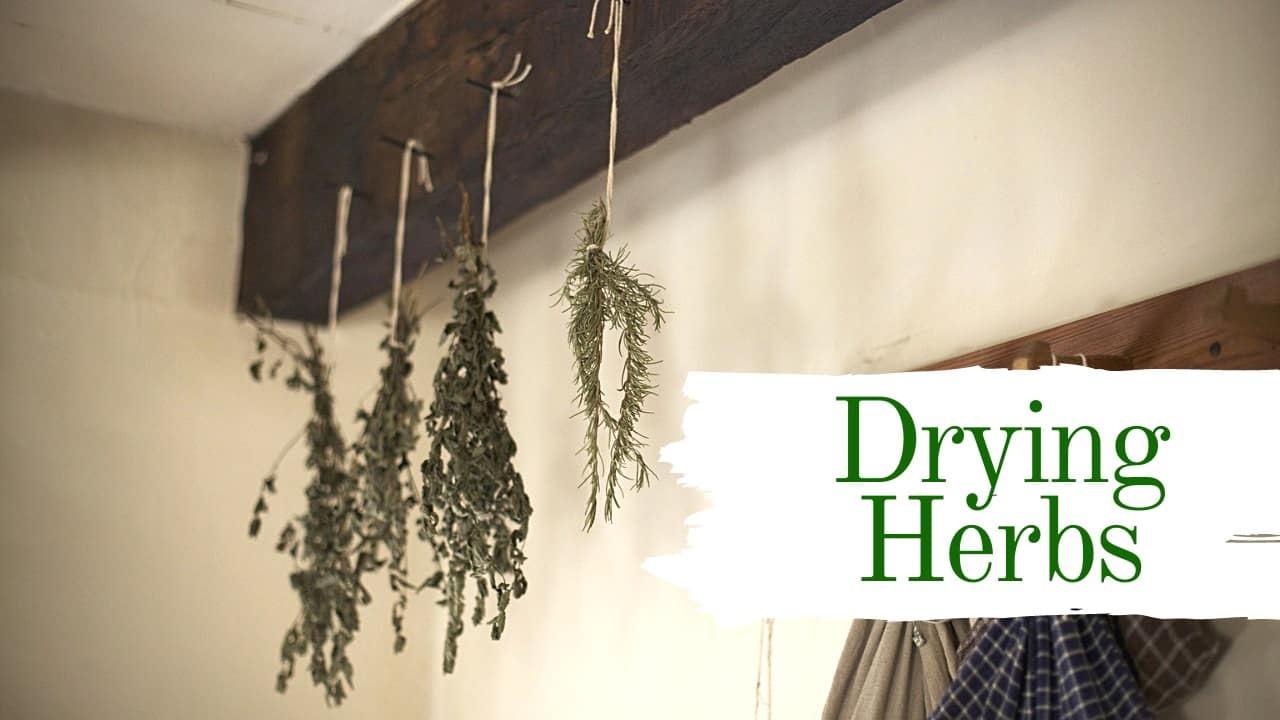 Drying Herbs at Home