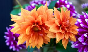 Flowers To Plant in June