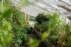 How To Heat Greenhouse Without Electricity