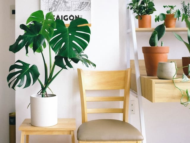 How To Stop Fungus Gnats Spreading to Other House Plants