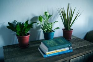 How to Get Rid of Fungus Gnats in Houseplants