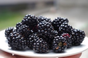 How to Grow Blackberries at Home
