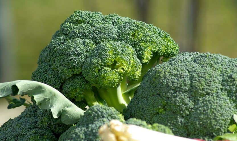 How to Grow Broccoli at Home