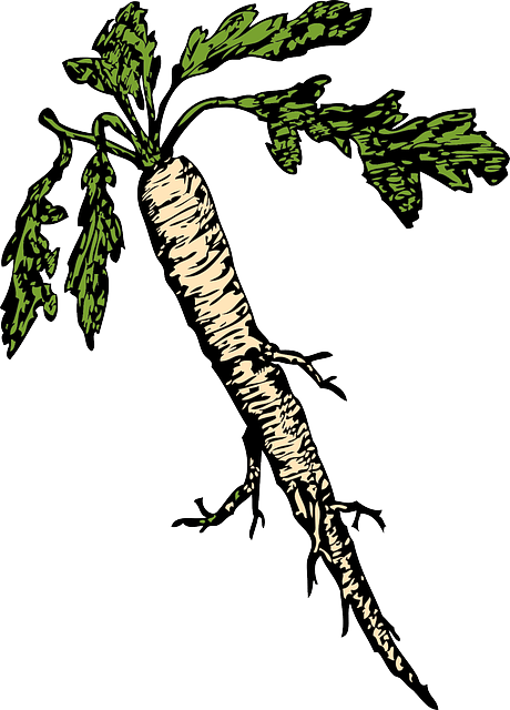 How to Plant Horseradish in the Garden