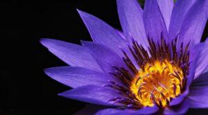 July Birth Month Flower Gift Ideas