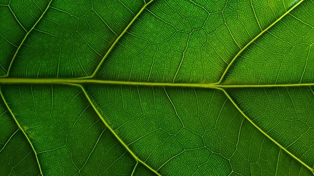 Fig Tree Fertilizer Ratio