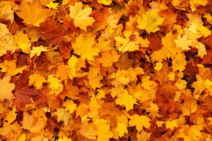 Leaves as Mulch Good or Bad - Leaf Mulch Benefits