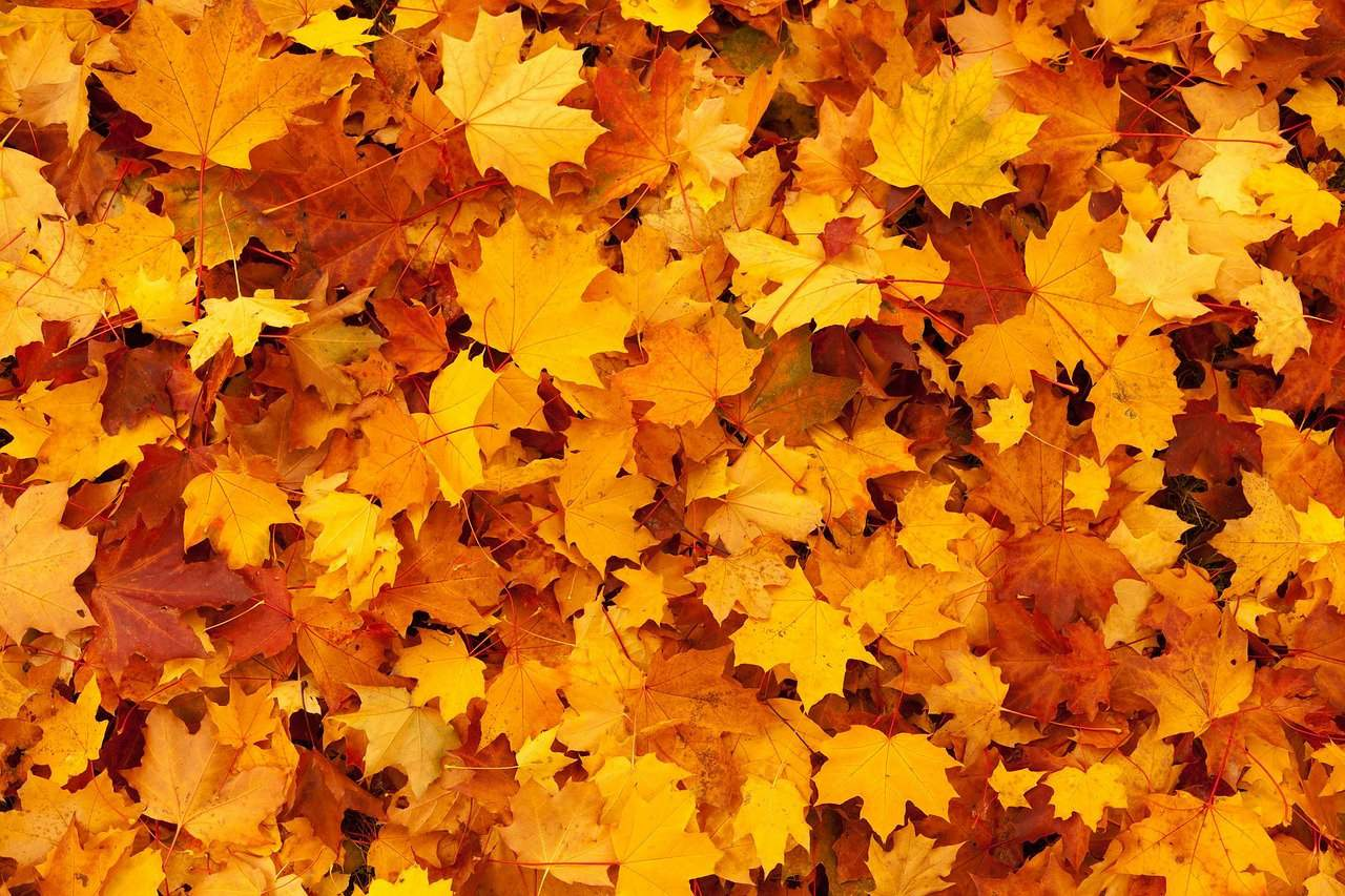 Leaves as Mulch Good or Bad