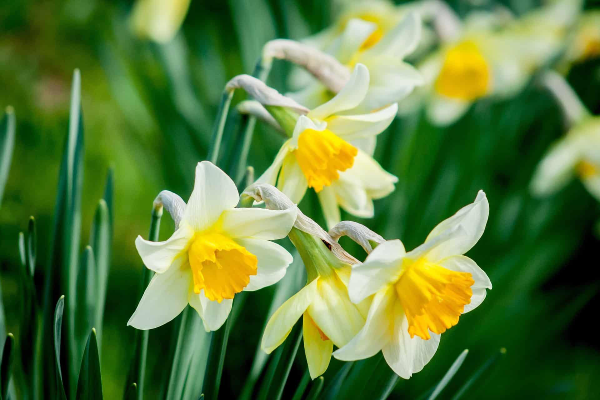 March Birth Flower Gift