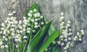 May Birth Flower Gift
