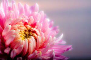 November Birth Flower Gift Ideas