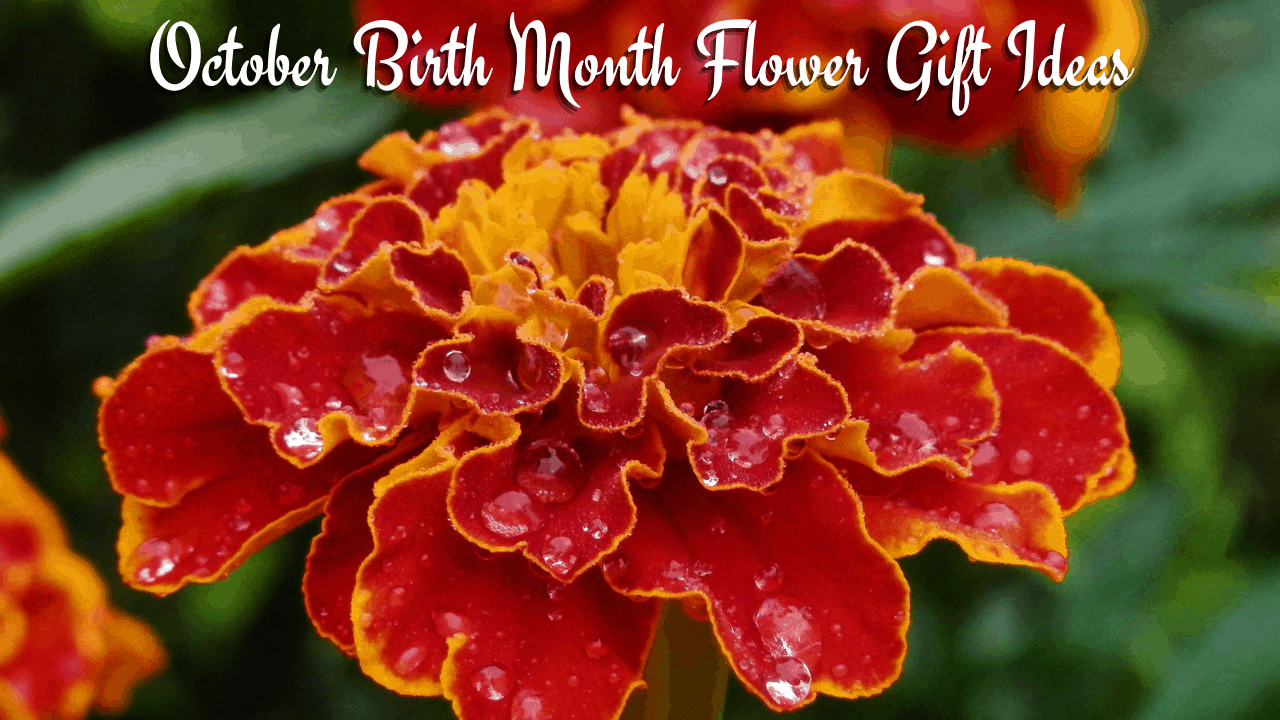 October Birth Flower Gift Ideas