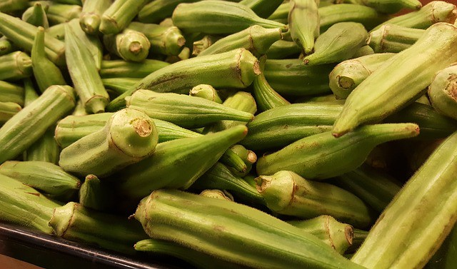Okra Care & Harvest