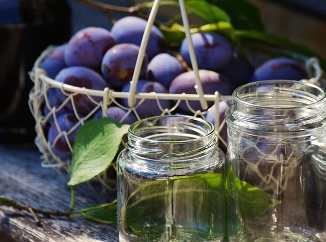 Plum Tree Care & Harvest