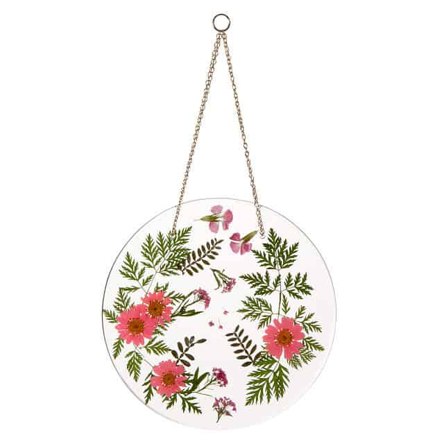 Pressed Chrysanthemum November Birth Month Flower Art