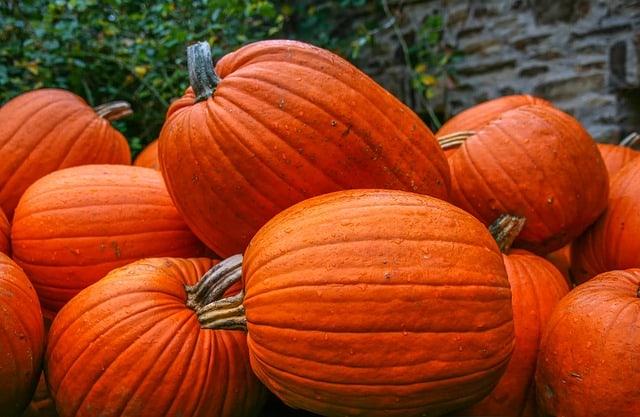 Pumpkin Care & Harvest