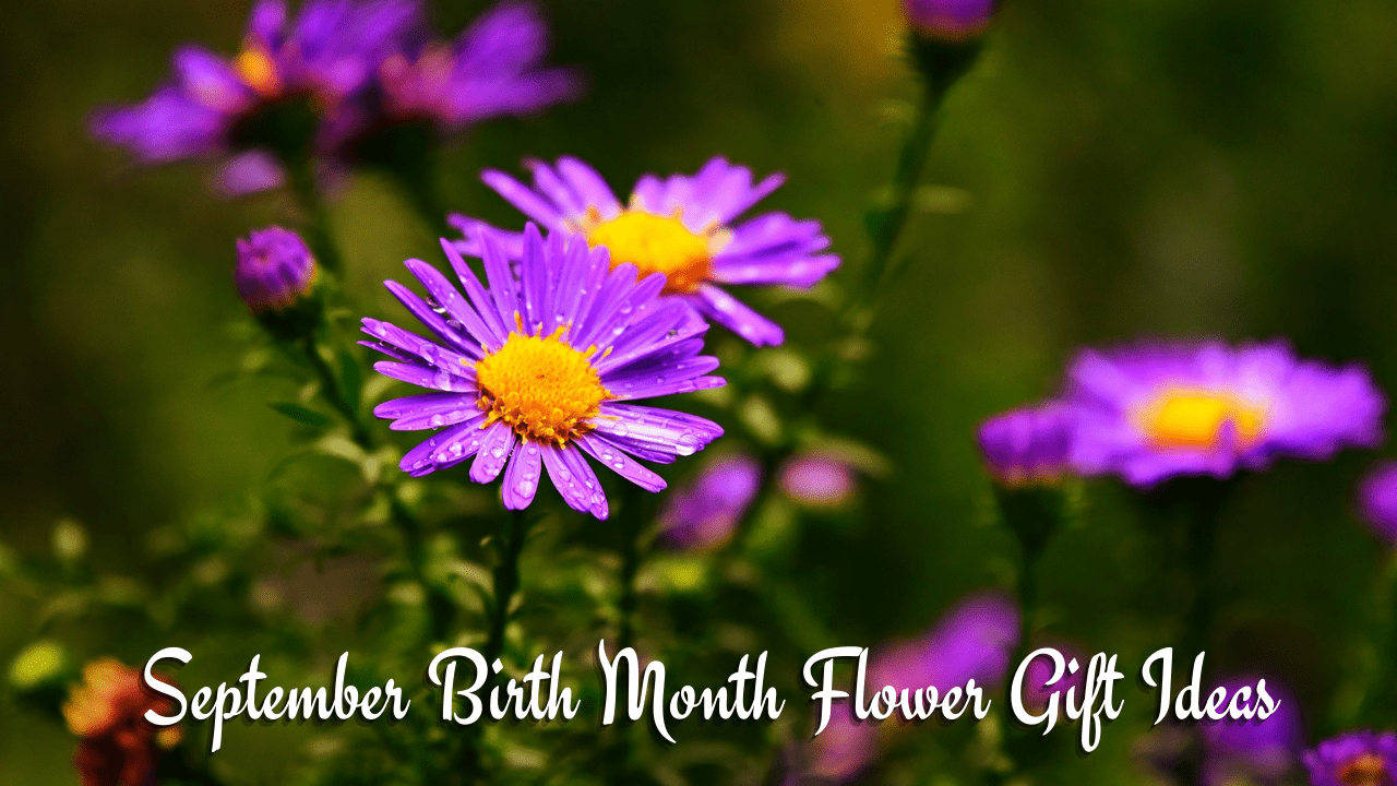 September Birth Flower Gift Ideas