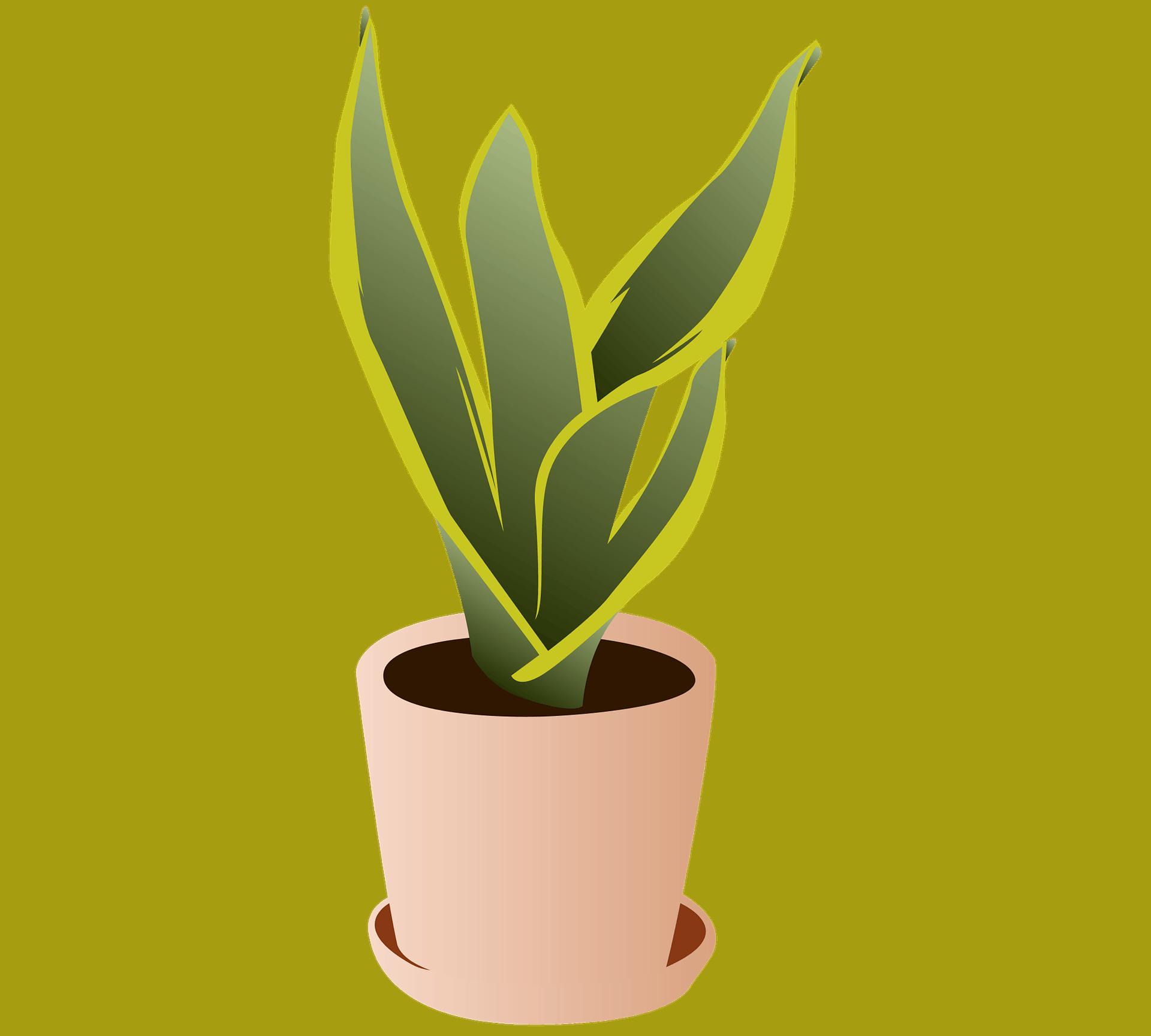 Snake Plant Pot Ideas