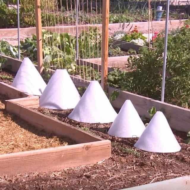 Styrofoam Rose Cones