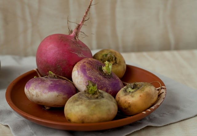 Turnip Care & Harvest