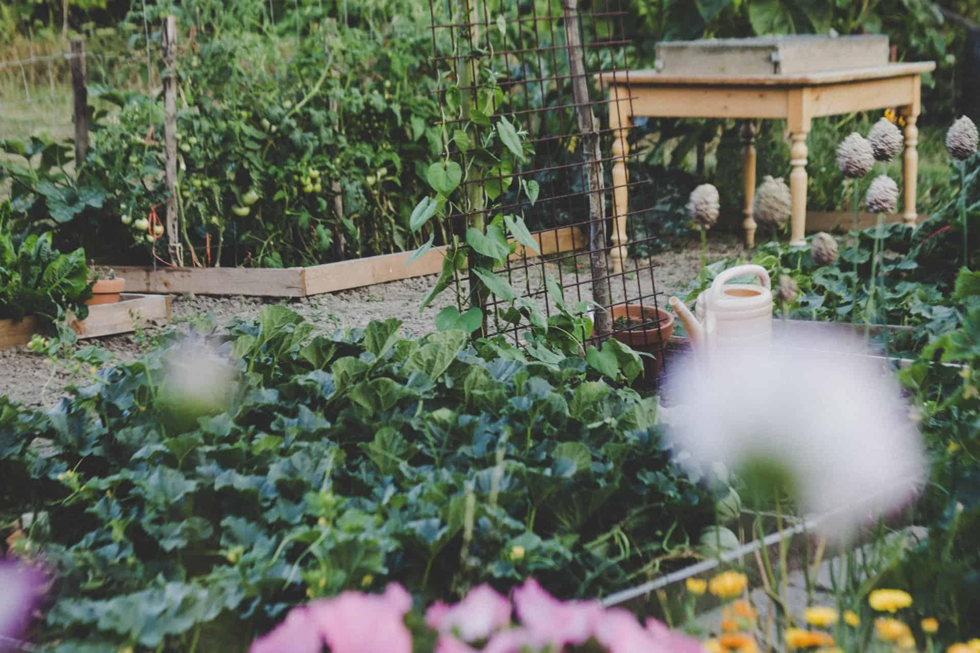 Vegetable Garden Electric Fence Kit