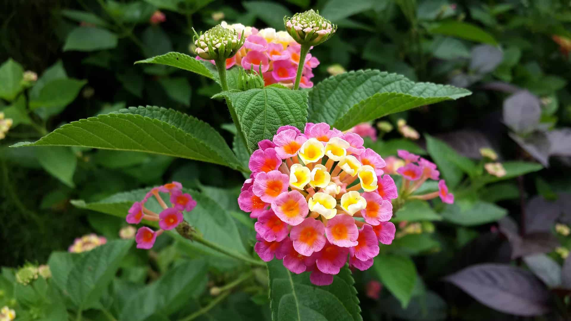 What Flowers to Plant in August