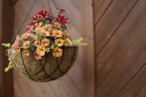 What Temperature is Too Cold for Hanging Baskets