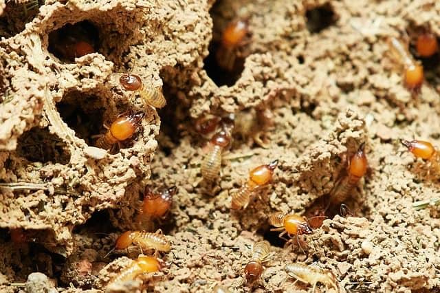 cypress mulch termites