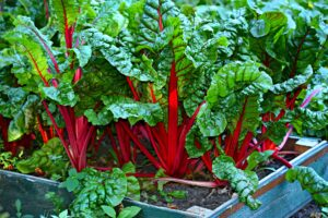 Fall Vegetable Garden - fall vegetables to plant