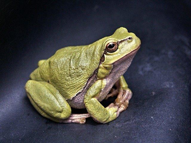 Frog on Pond Liner