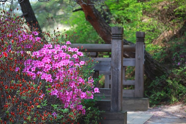 When To Fertilize Azaleas in Virginia